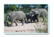 kruger national park attractions