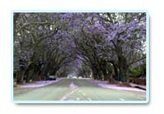 groenkloof tourist attractions